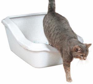 Как выбрать туалет для кошки